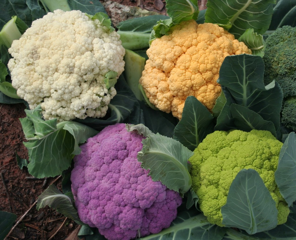 Many colors of cauliflower